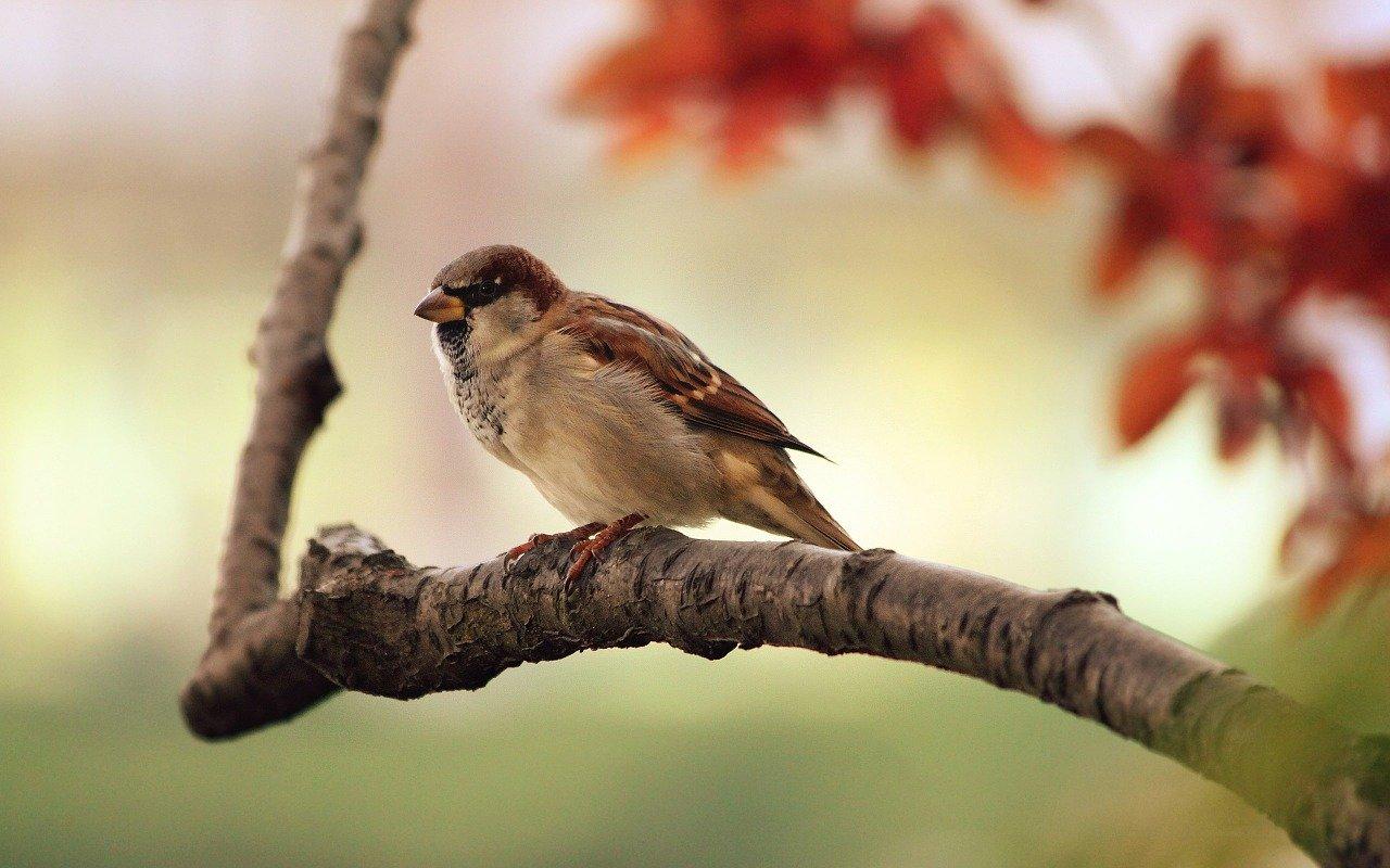 sparrow 9950 1280 - 野鳥を通じ非日常を楽しめるジャパン・バードフェスティバル